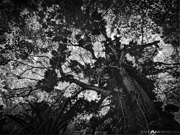 The Rainforest #2 in Black and White by matt anderson