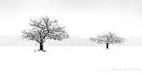 Winter Trees #8 (Tree Amigos) by Matt Anderson