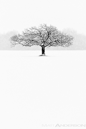 Winter Tree #7 by Matt Anderson