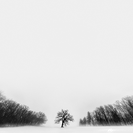 Winters Tree #10 by matt anderson