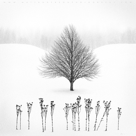 Winter Tree #13 by Matt Anderson